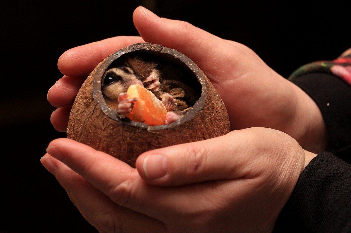 мир планеты в наших руках... - Ирина