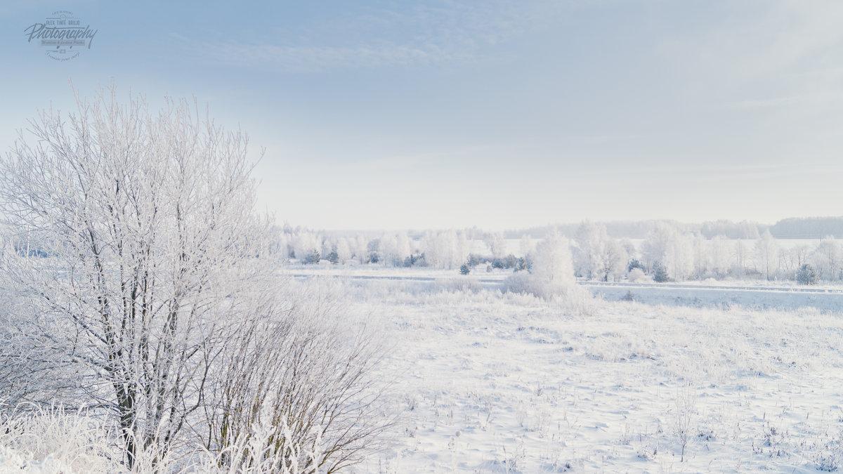 зима - Алексей Жариков