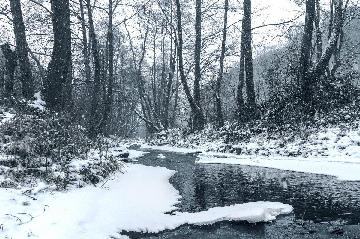 Зимний лес - Сергей Форос