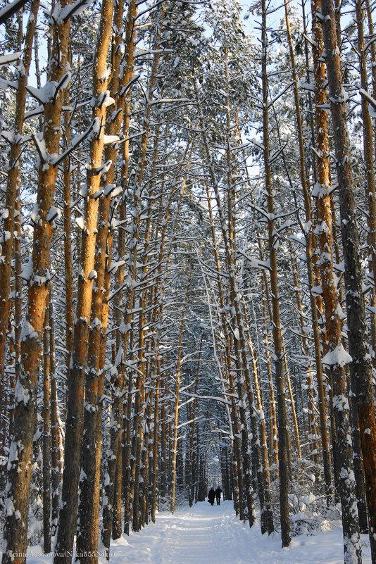 Зимний шатёр - nika555nika Ирина
