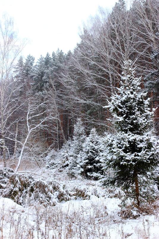Зимний лес - Leo