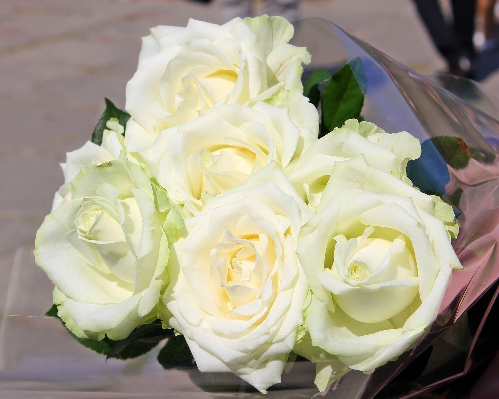 Поздравляю всех Тань,Танечек,Танюшек  с Татьяниным днем !!!! - Валентина ツ ღ✿ღ