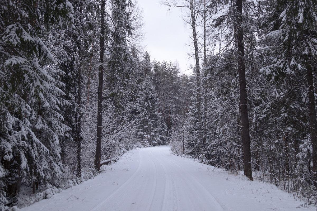 Дорога через лес - Светлана