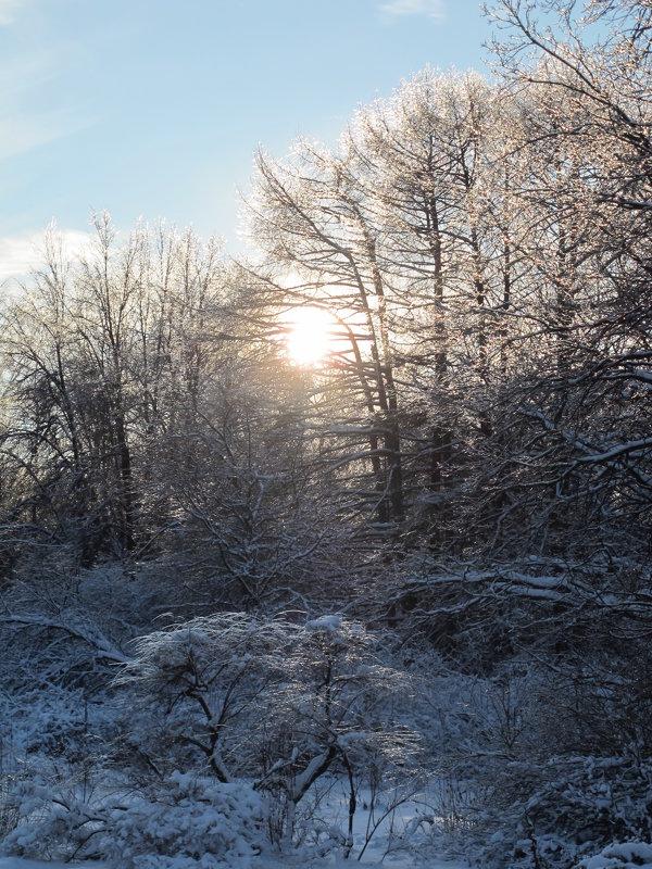 Зимний лес - Мари ^_^ !