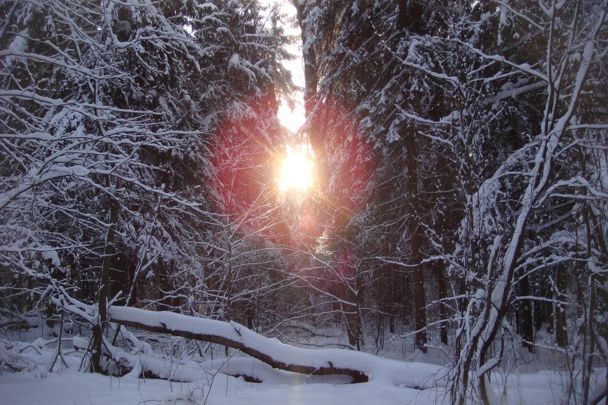Зимний пейзаж. - Antonina