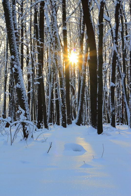 Зимний вечер в лесу! - Наташа Шамаева