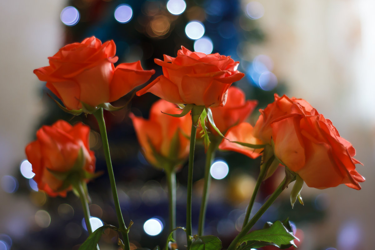 Розы - Aleksandr Aleksandrov