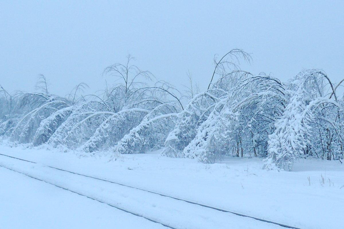 Зима - Надежда Акушко