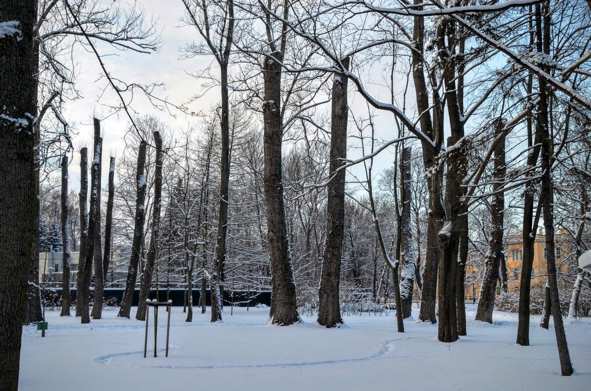 Парк на Каменном острове - Юрий Тихонов