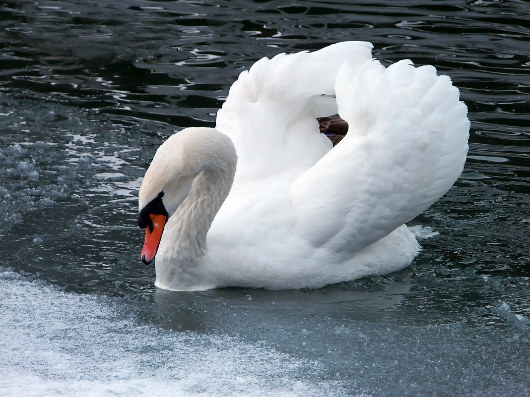 Плыву во льдах,как ледокол! - Наталья