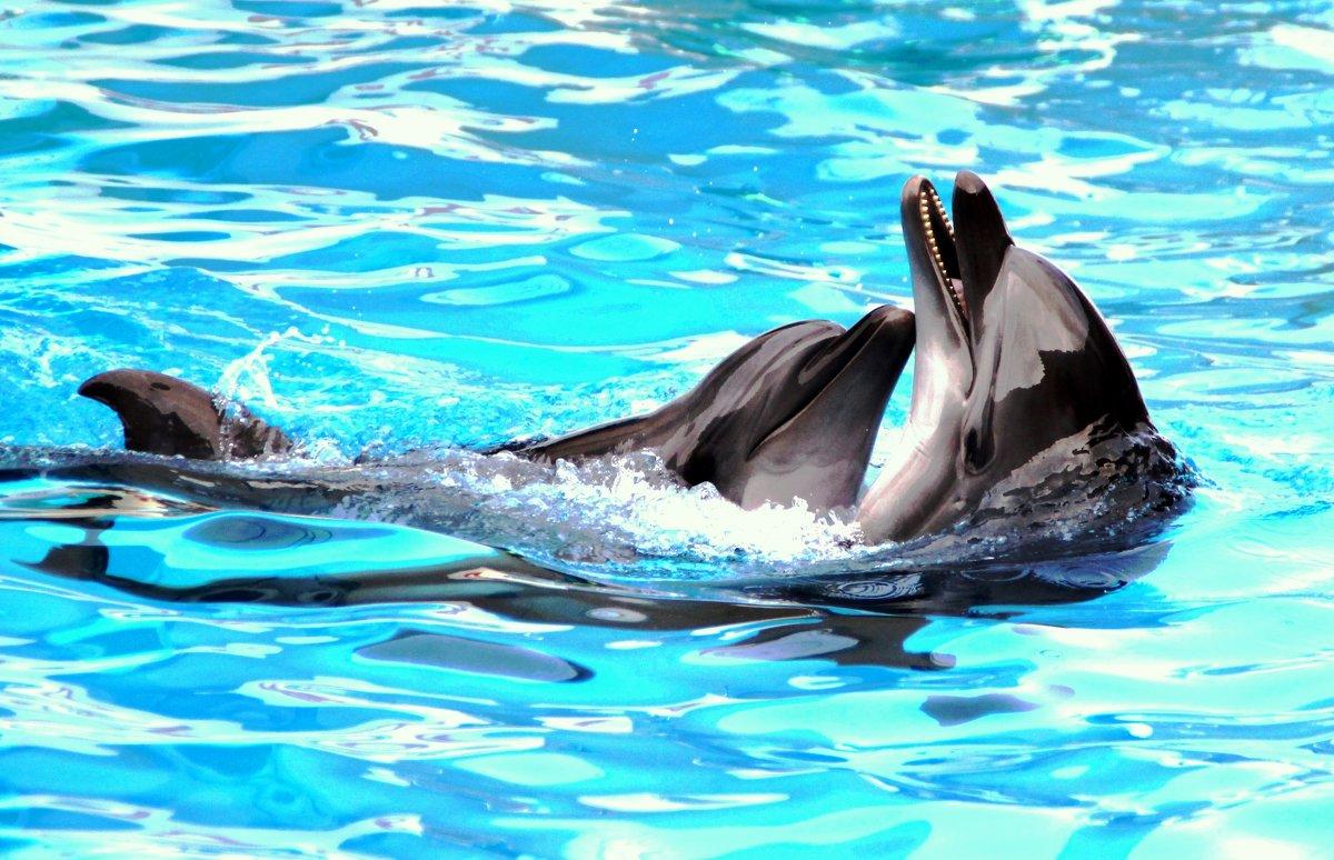 дельфинья любовь - Анастасия Алёшина