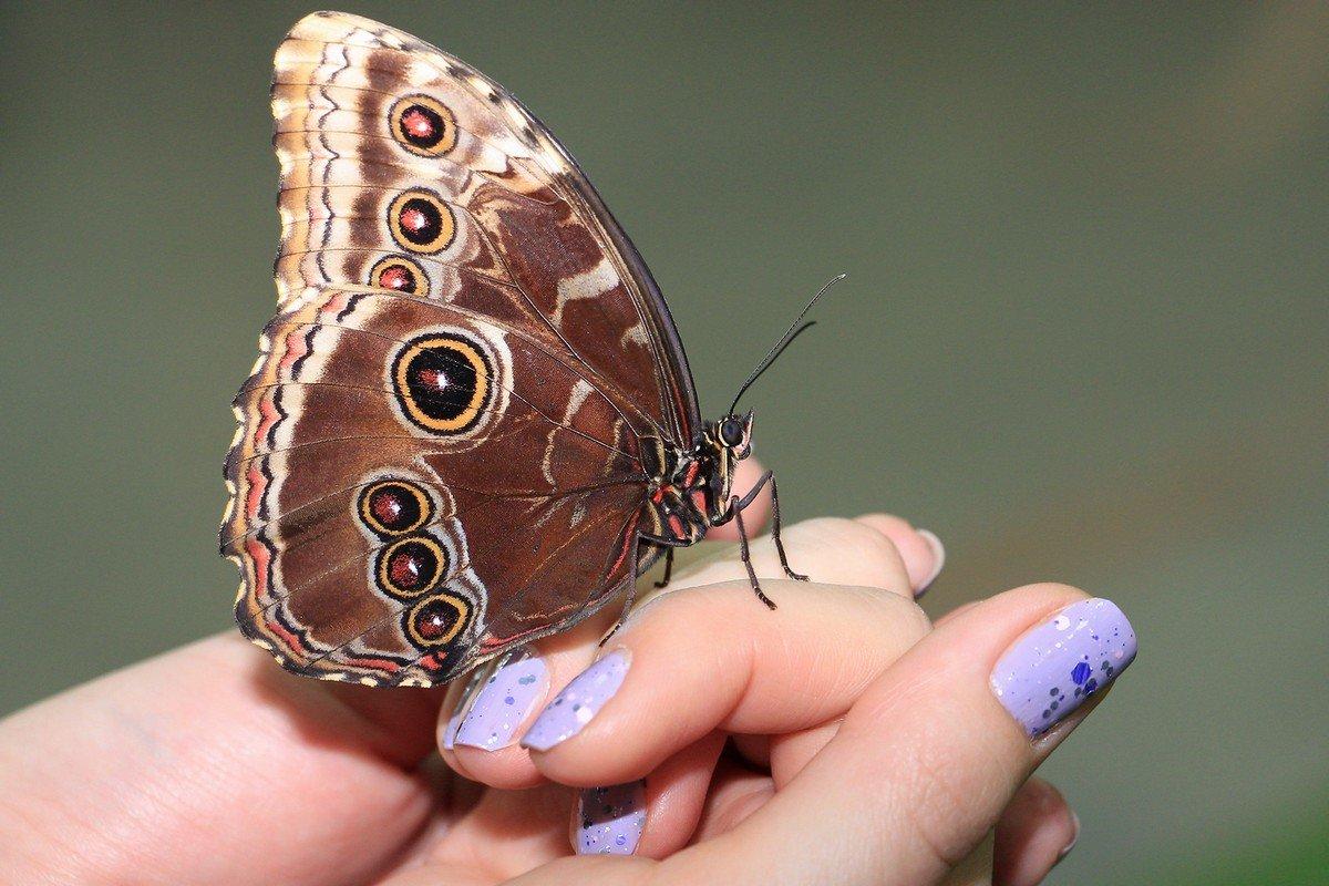 вдохновение от природы... - Ирина