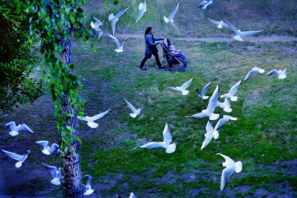 птицы - мирон щудло