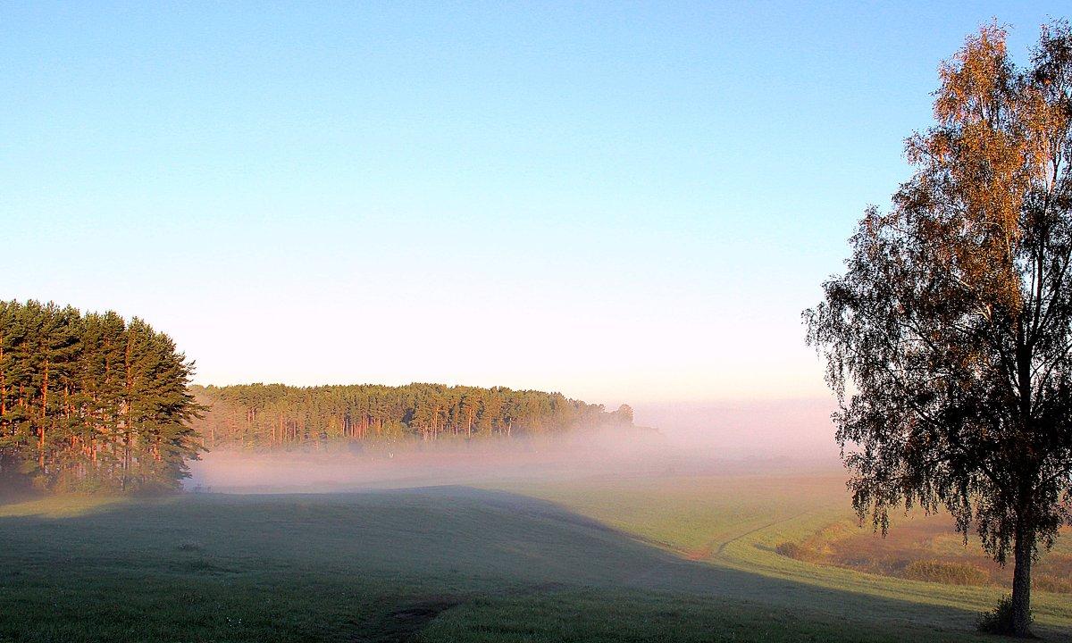 розовый туман - Нина