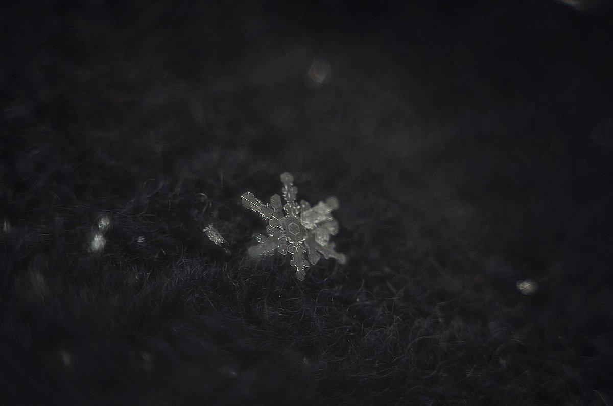 """""""Двух одинаковых снежинок не бывает"""" -  Уилсон Элвин Бентли - Вика К."""