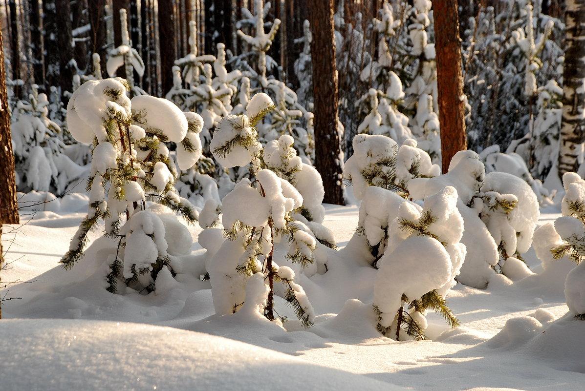 Зимний этюд - Валерий Толмачев