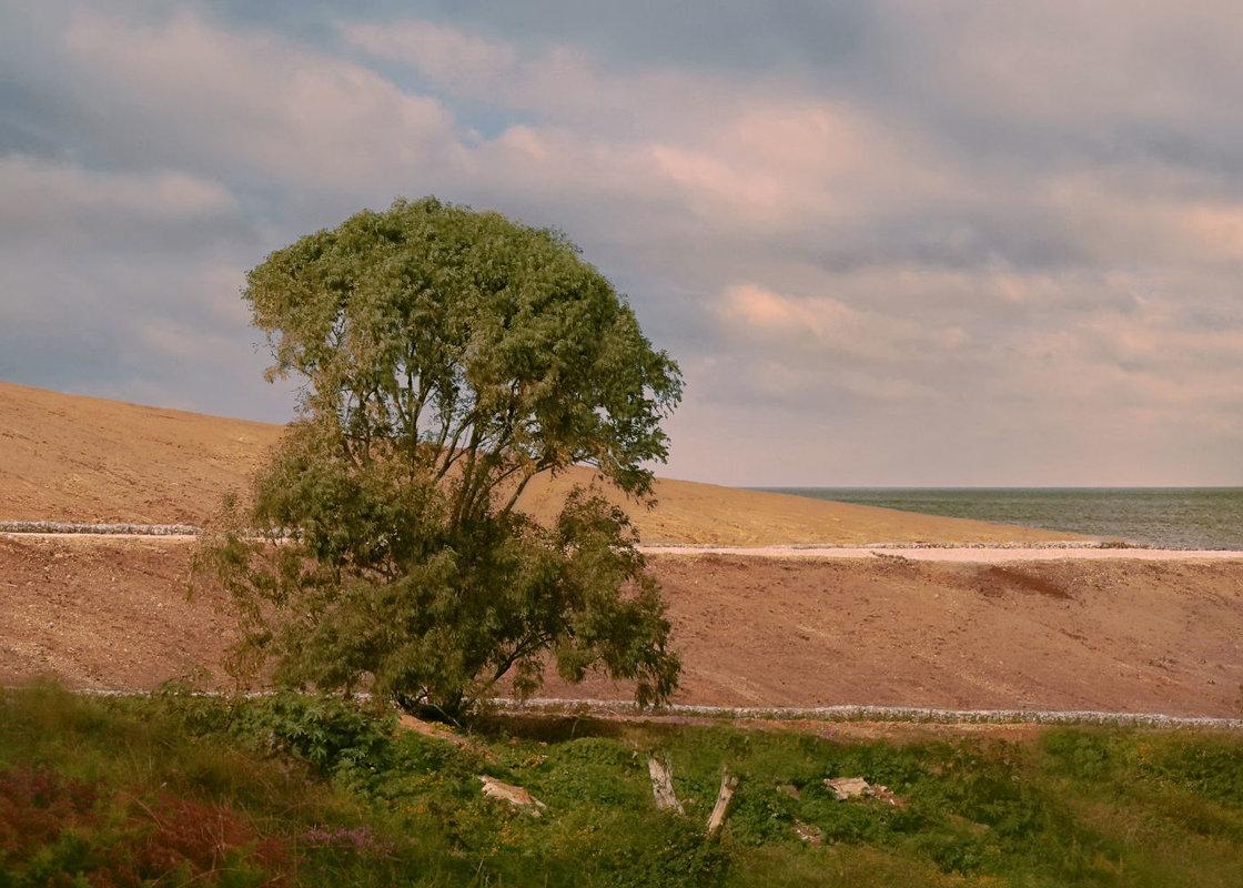 Последнее дерево - Ron Леви
