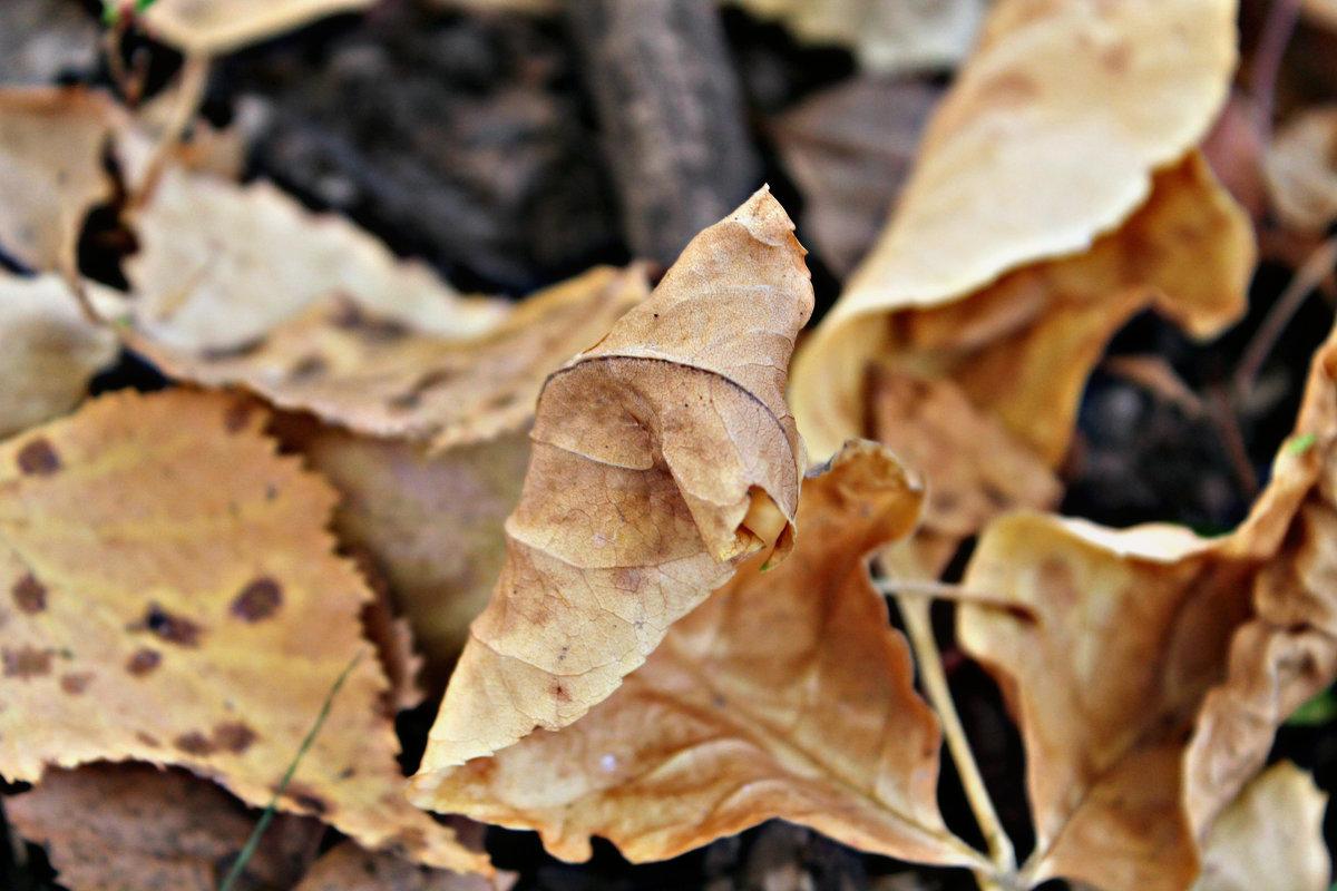 Осень - Камила Галимова