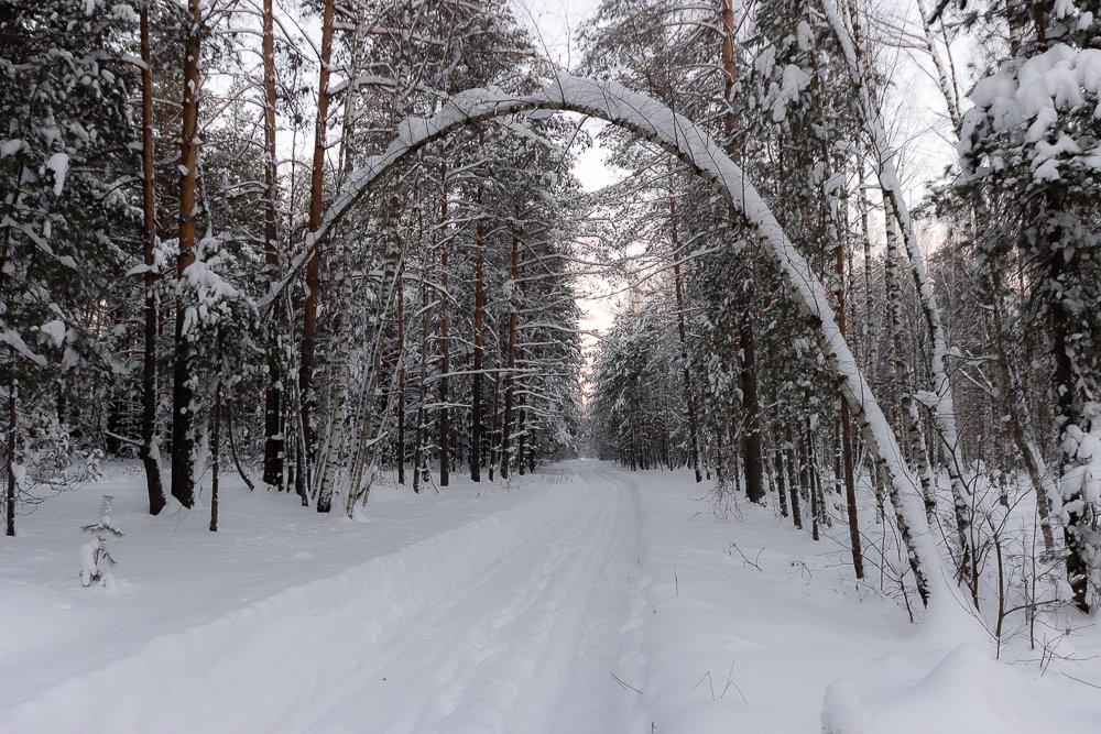Ворота в лес - Михаил