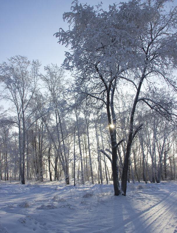 Зимнее солнце - JulO Юлия