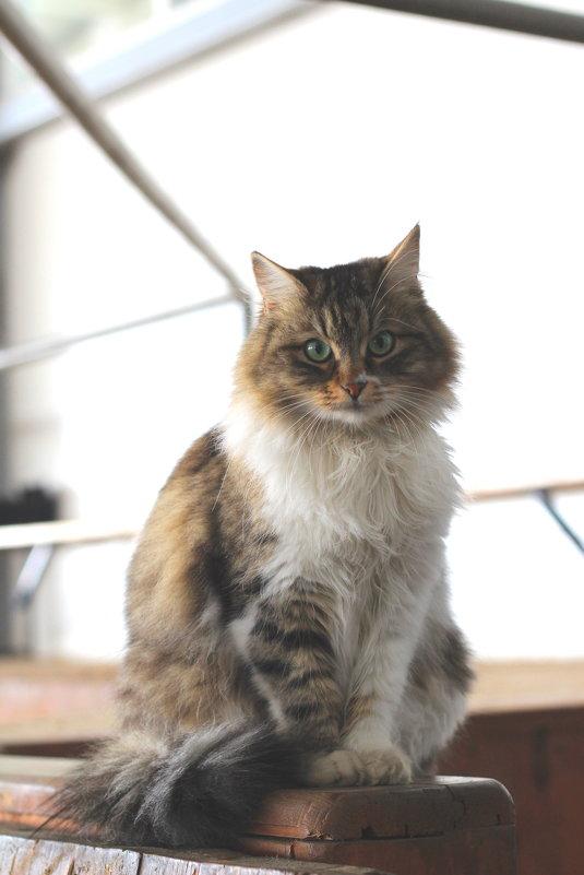 Кот! - Наташа Шамаева