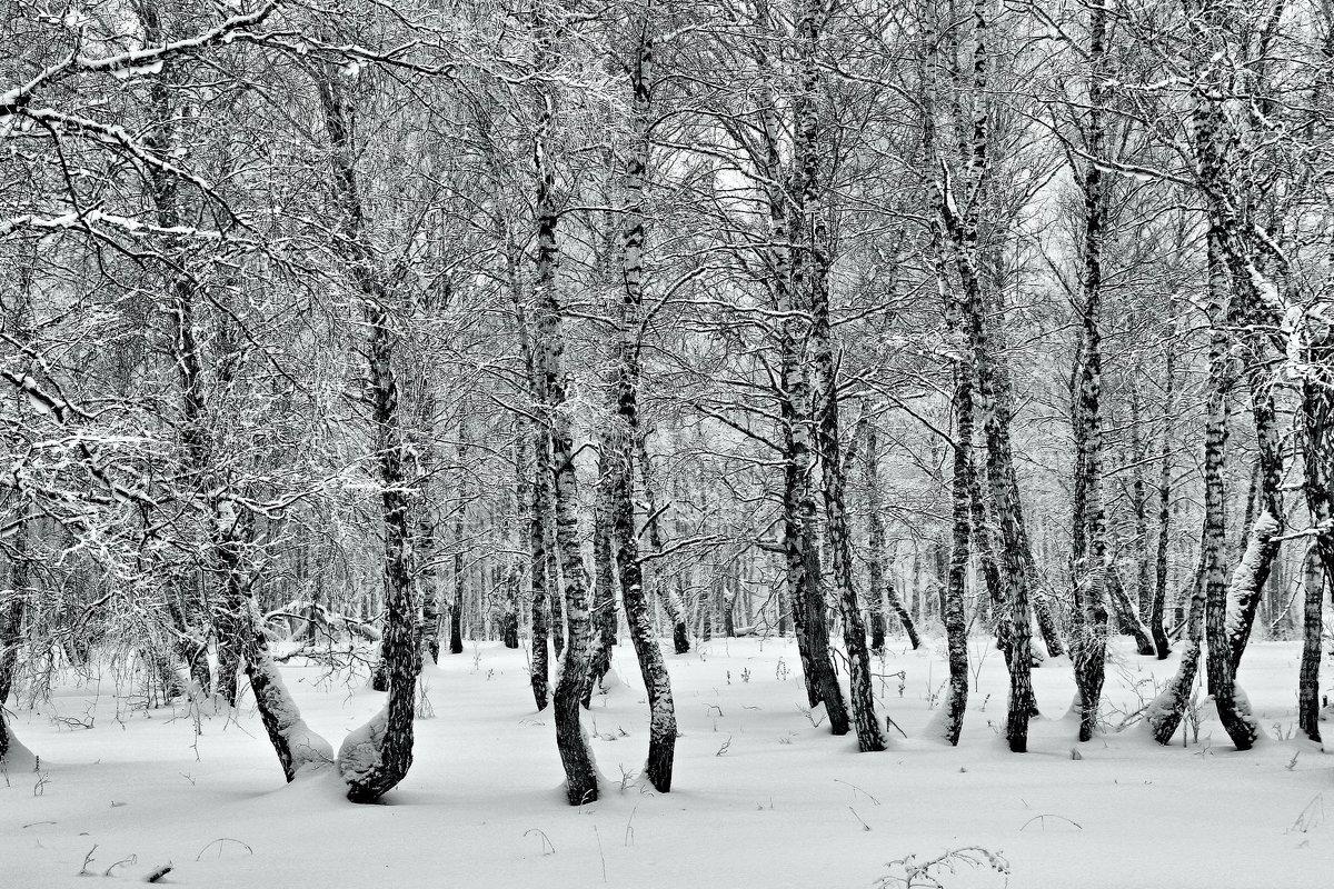 Зимний  монохром 2. - Vlad Borschev