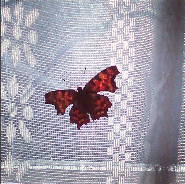 Деревенская бабочка - Софья