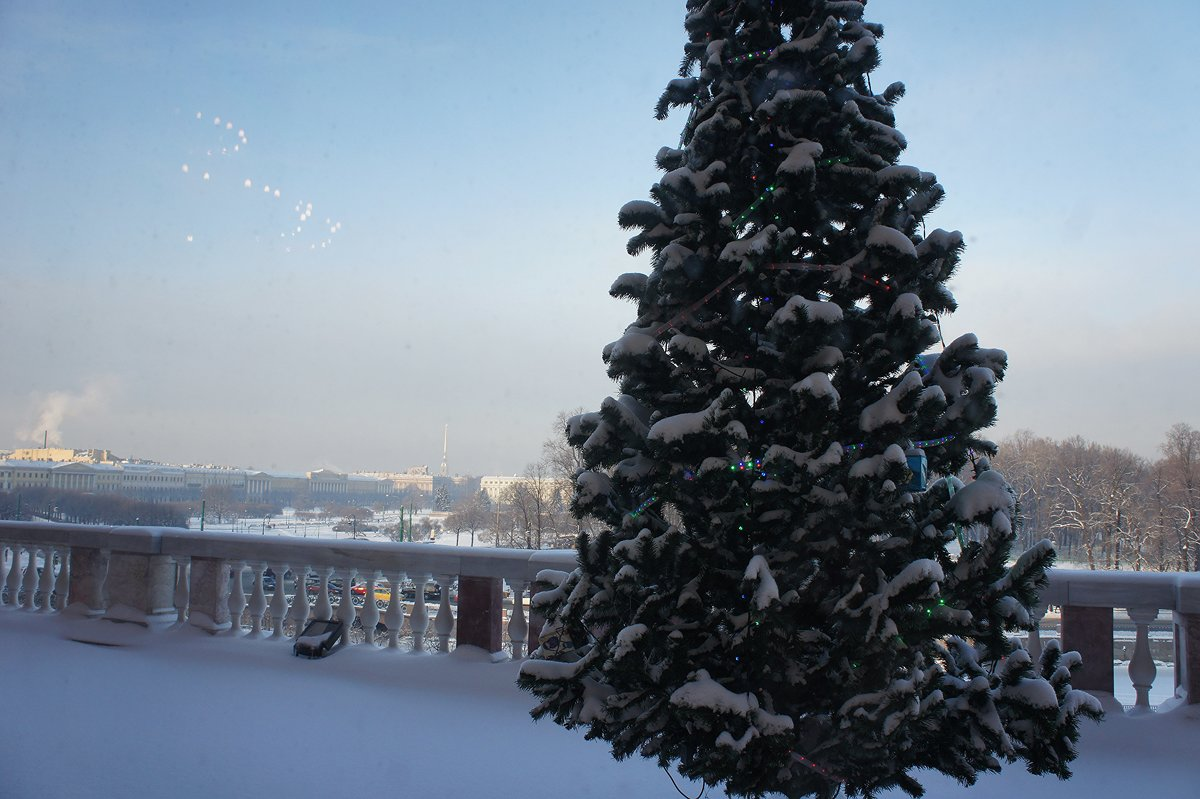 Вид из окна Михайловского (Инженерного) замка - Елена Павлова (Смолова)