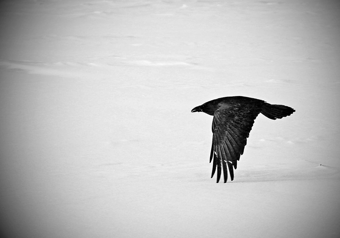 """...пролетая... (""""Черный ворон""""..) - Александр Герасенков"""