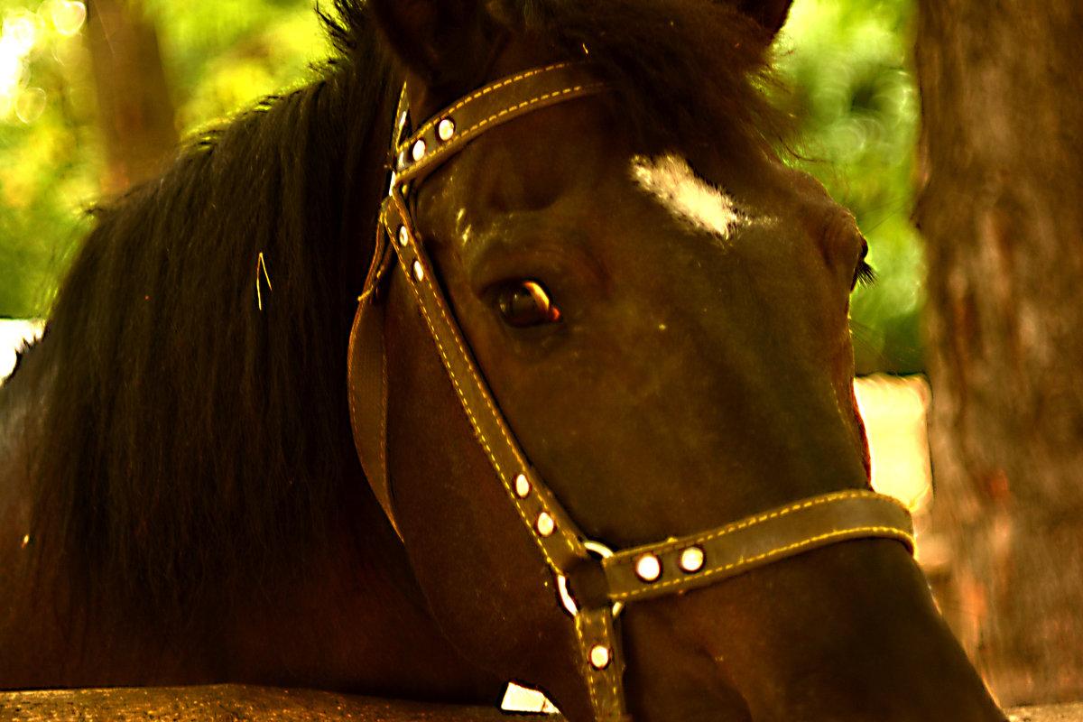 Конь - Стас