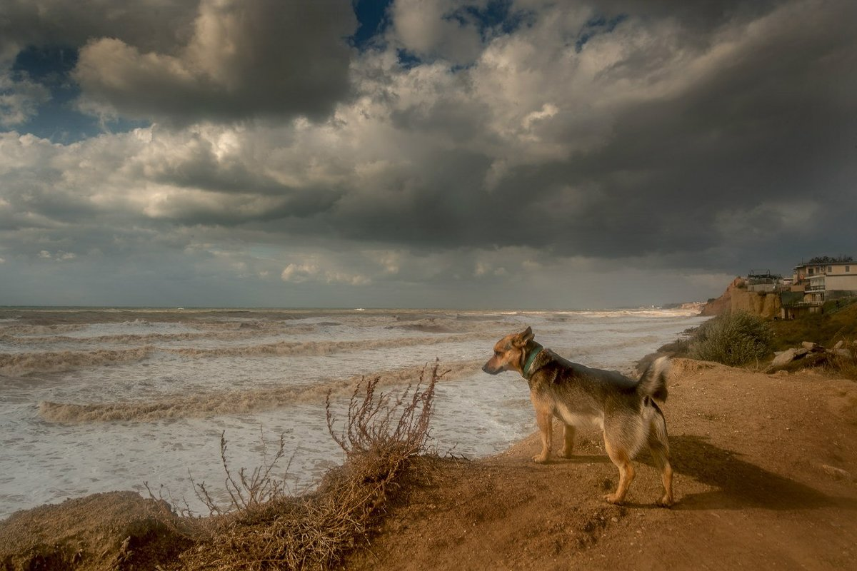 Собака и море - Алексей Содоль