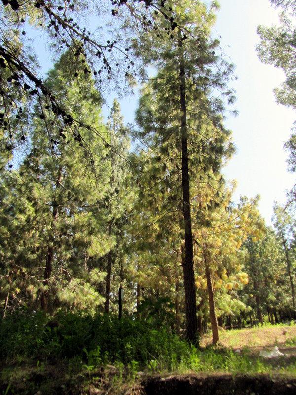 лес - Герович Лилия