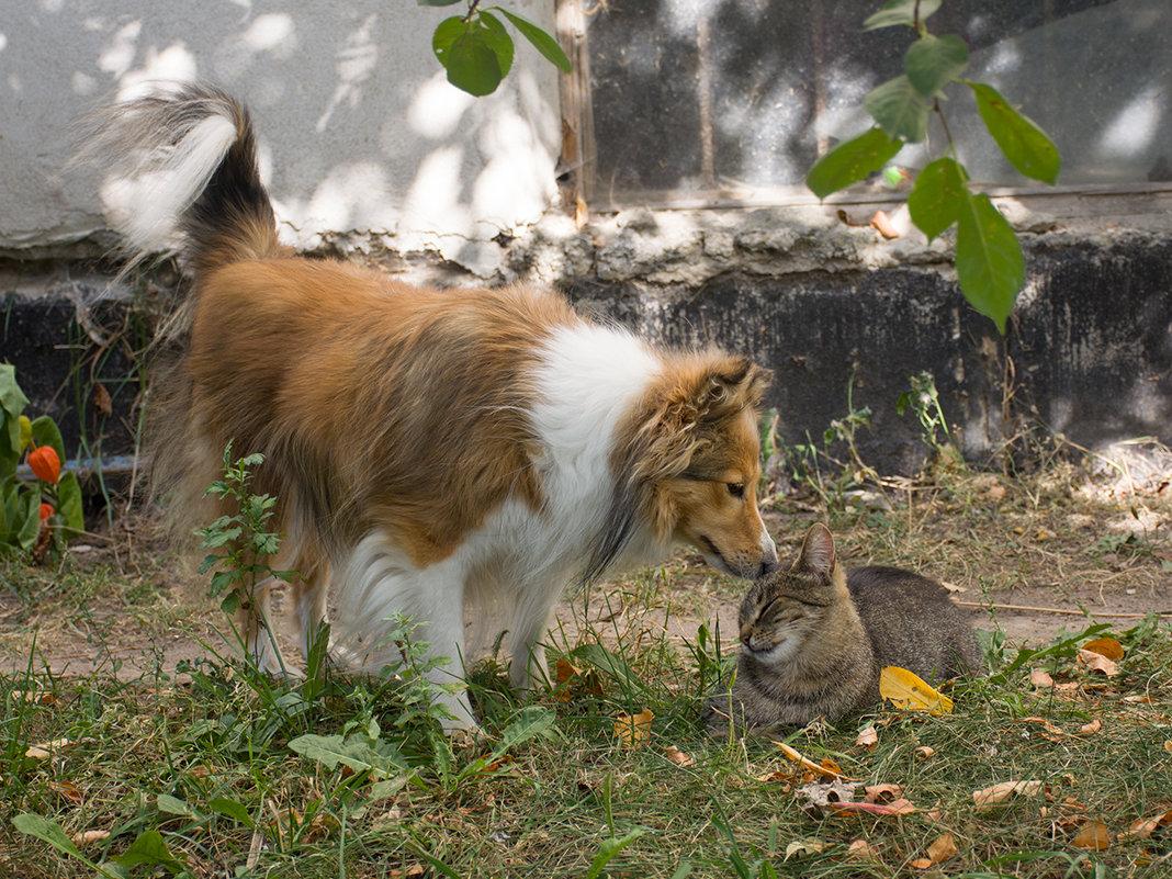 Кошечка и собачка - Alena Silkova  (Likka)