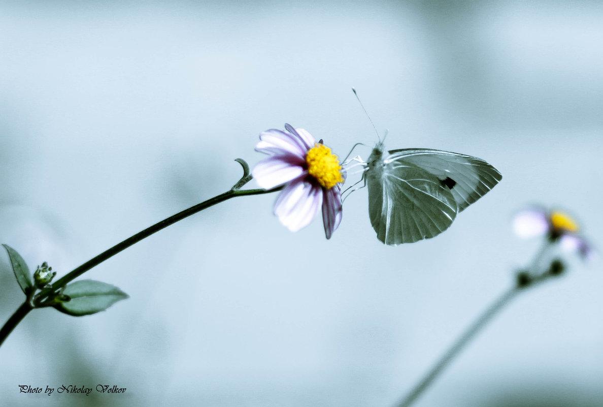 Бабочка - Николай Волков