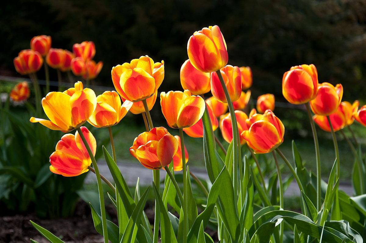 В каждом цветке солнце... - Наталья Костенко