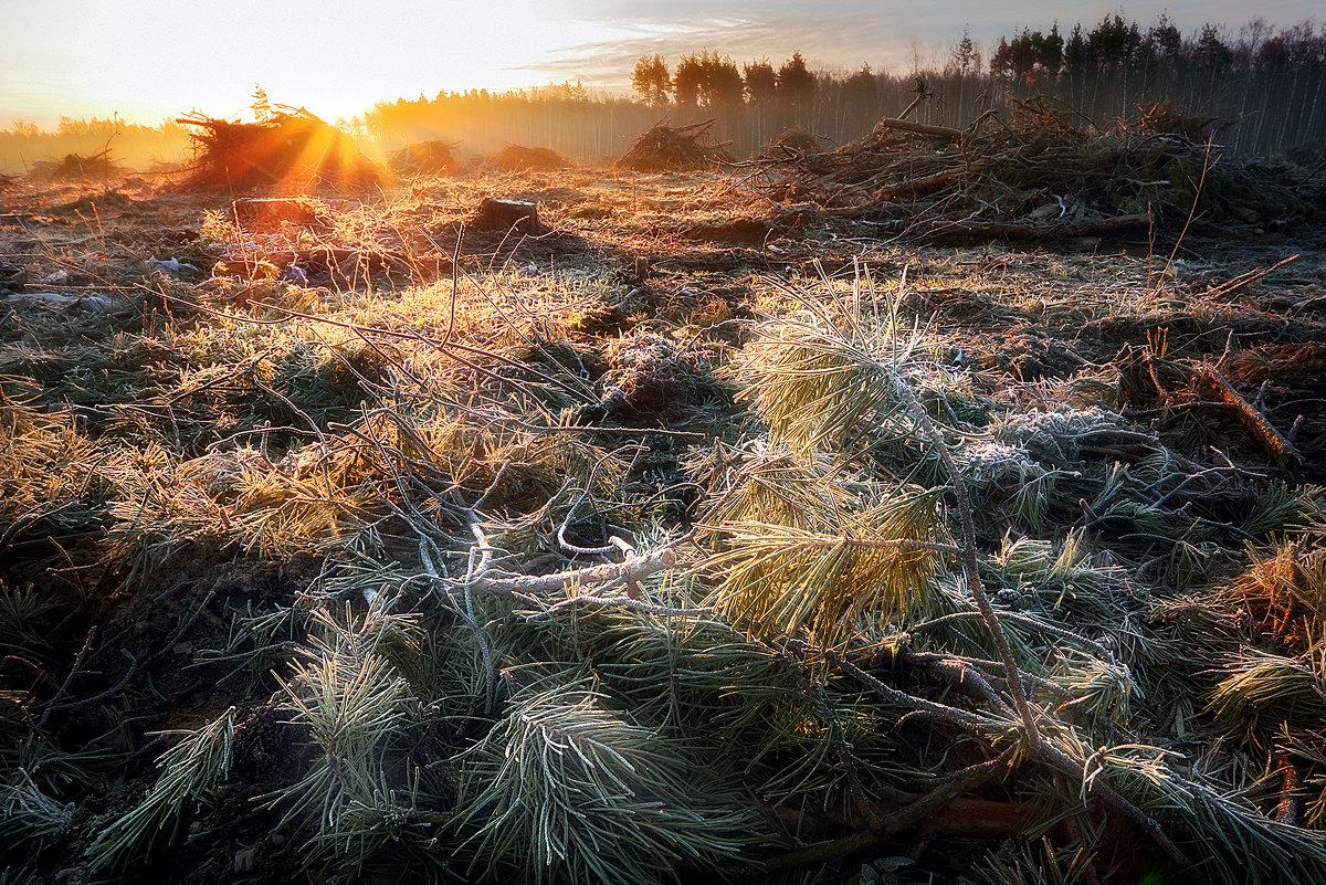 Рассвет поверженного леса...2 - Андрей Войцехов