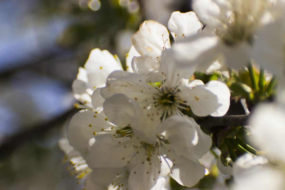 цветы - олег мысак