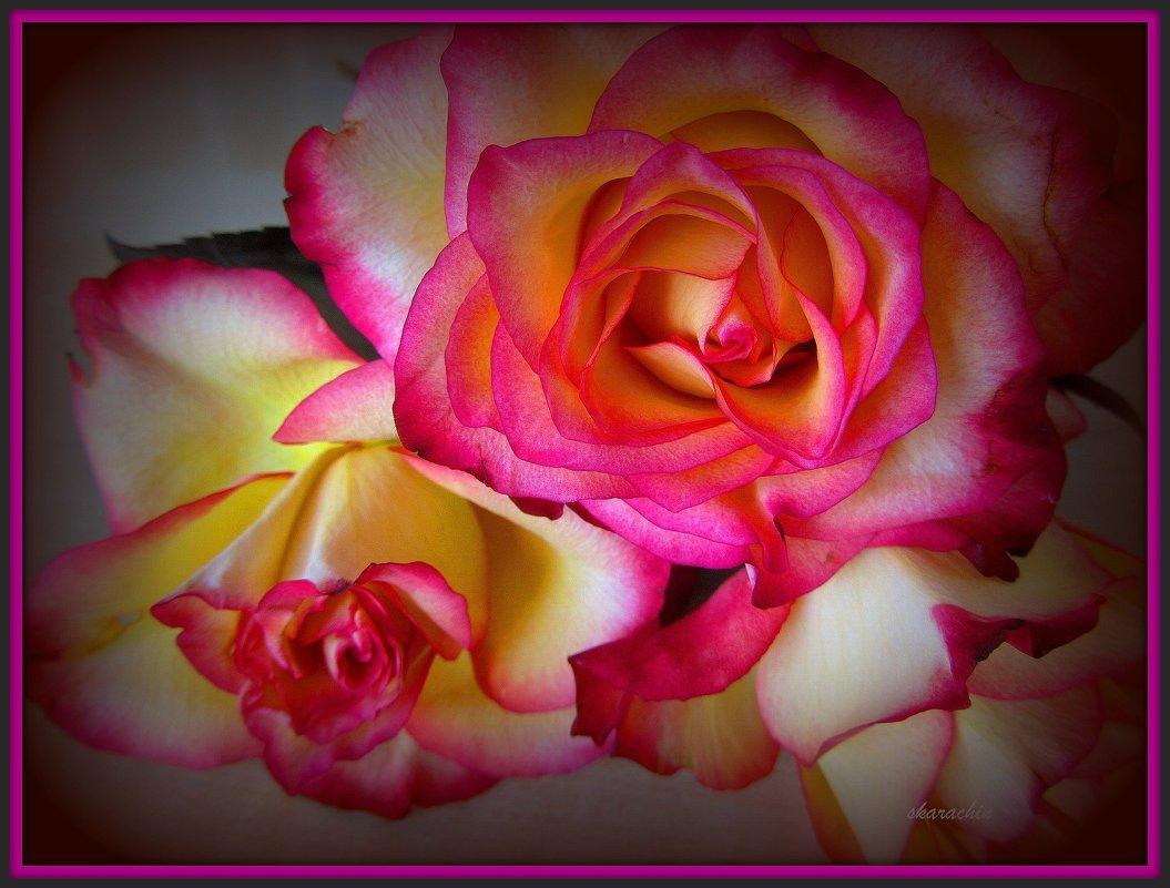 Благоуханные розы - Сергей Карачин