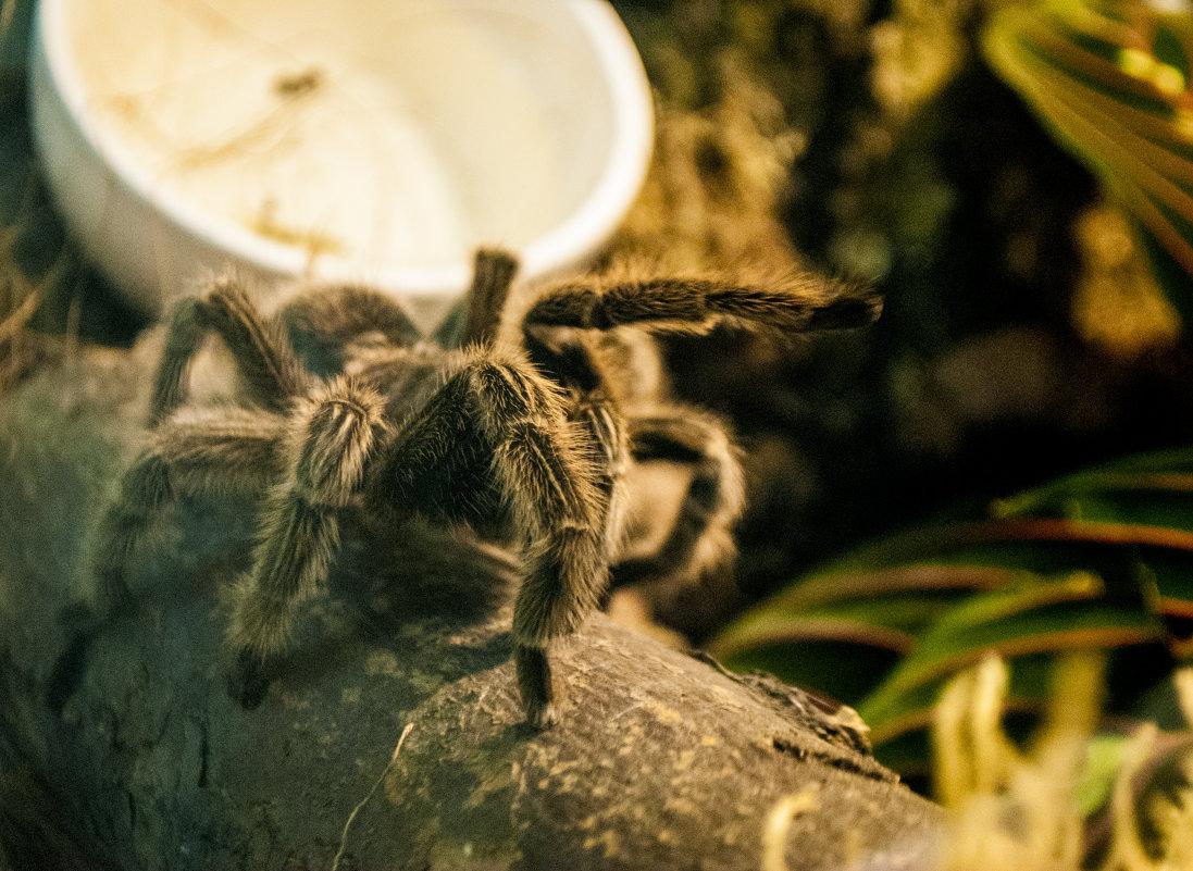 """Испанский"" шаг волосатого паука - Billie Fox"