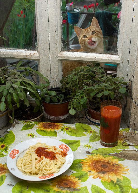 Мои ужин и кот - Владимир Дядьков