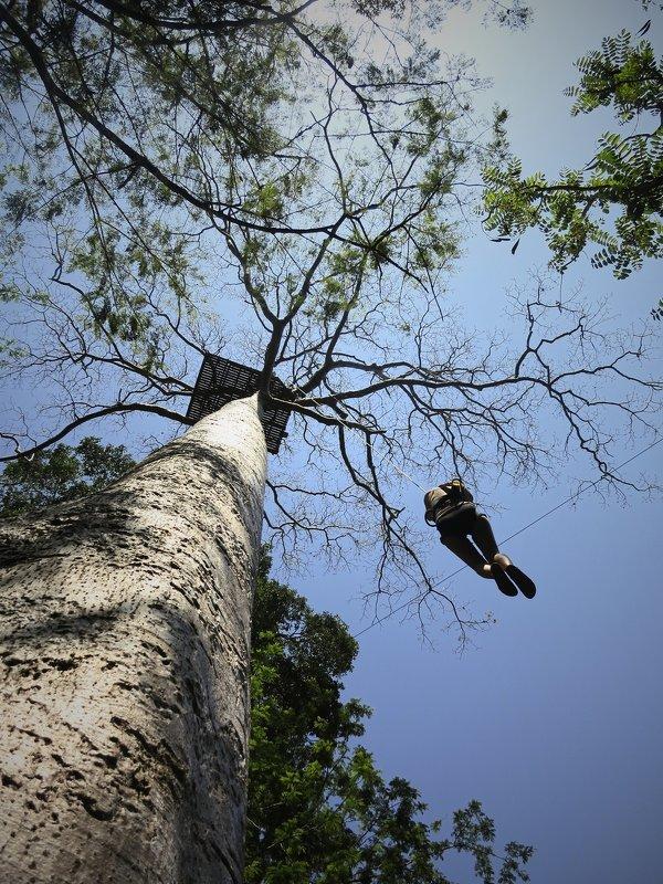 Человек на дереве - Anastasia Melnikova
