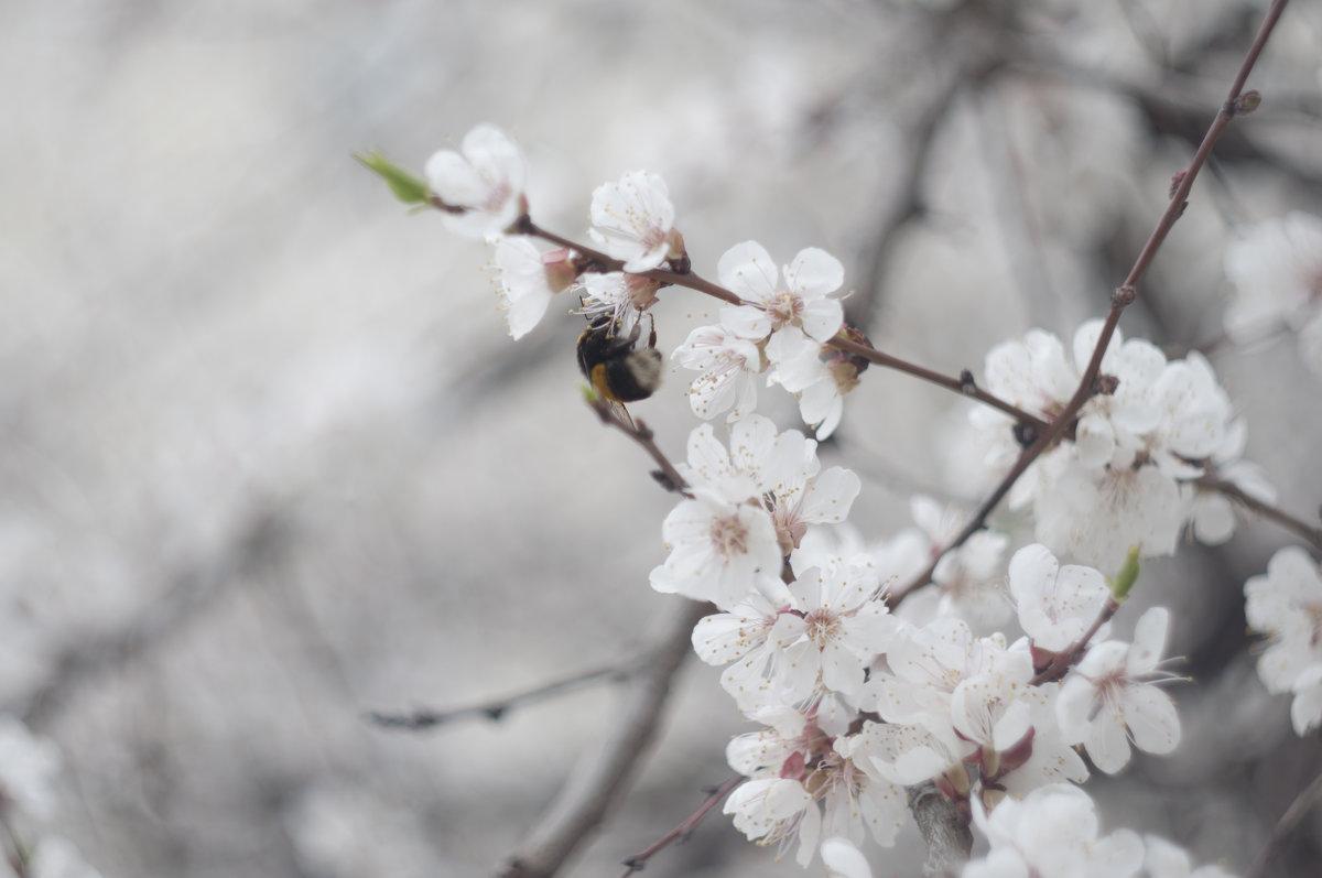Flower_87 - Trage