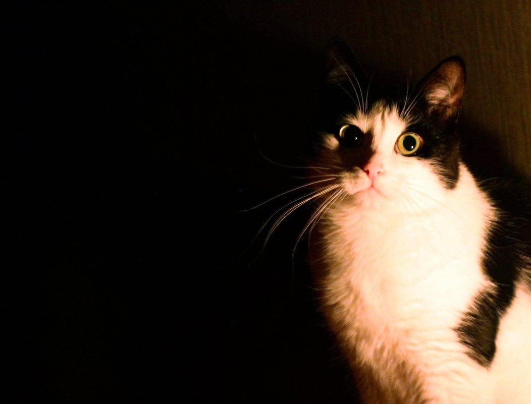 Кошка в тёмной комнате - Avada Kedavra!