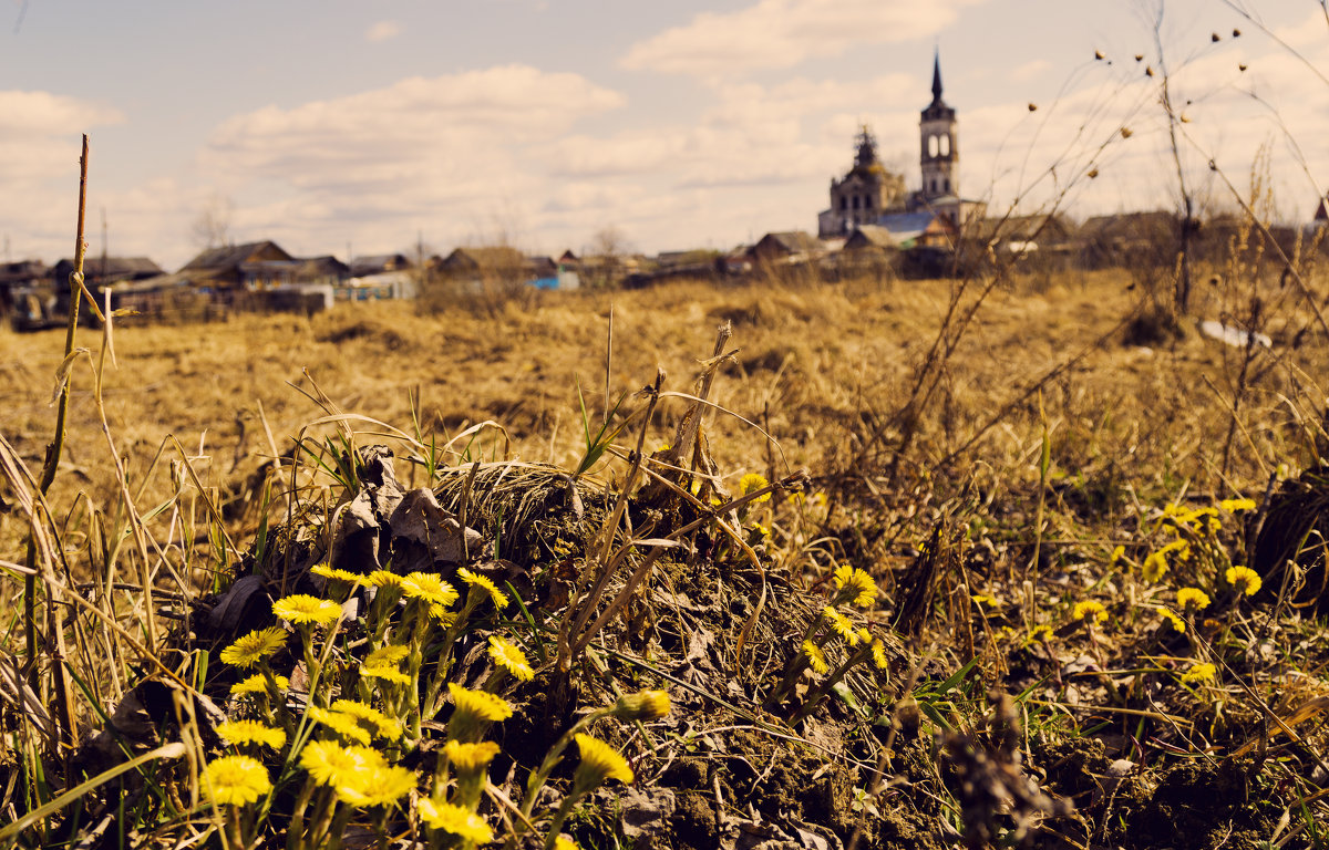 Первые цветы. - Андрей Леднев