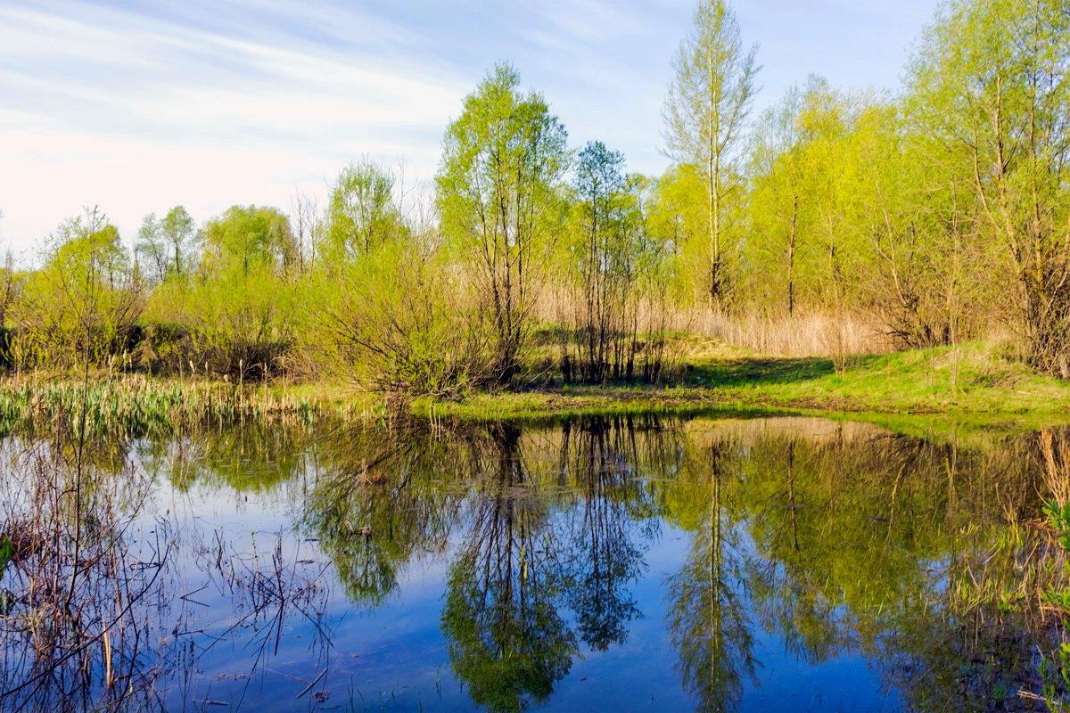 Весна, все зеленеет.. - Юрий Стародубцев