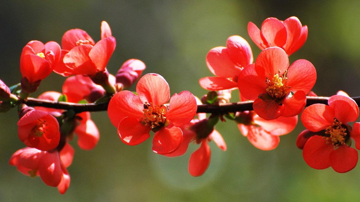Аромат весны - Nikola