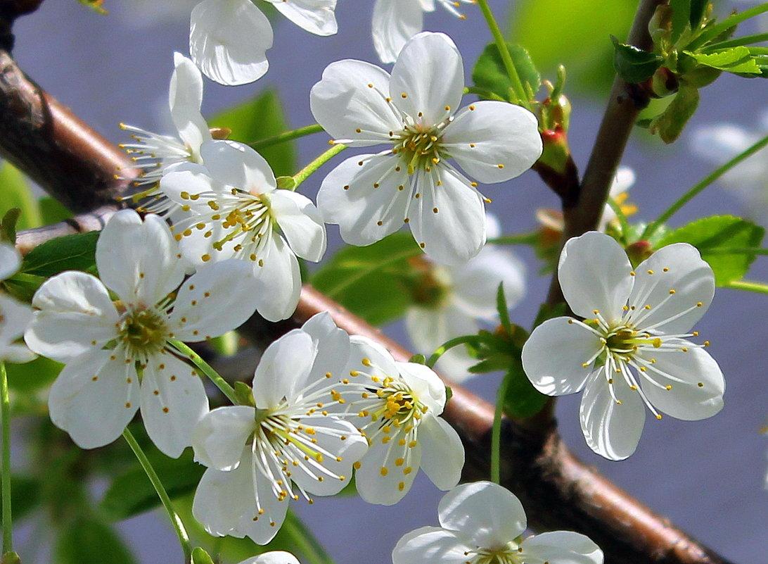 Словно невеста, свежа и невинна, цветочки вплетает в венки. - Валентина ツ ღ✿ღ
