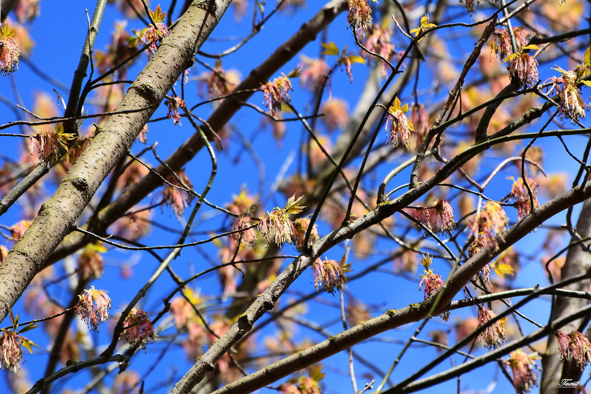 Весенний этюд - Paparazzi