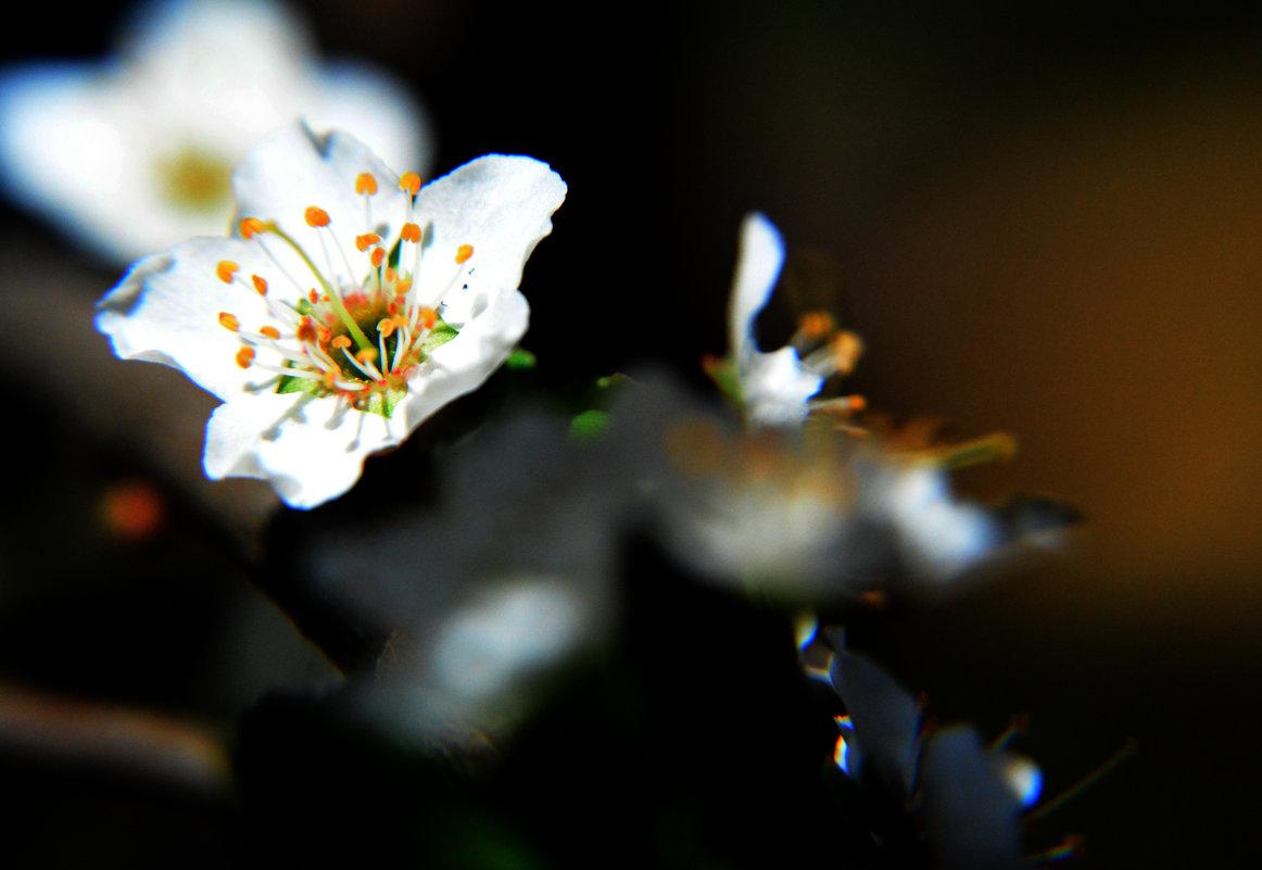 весна - Irina
