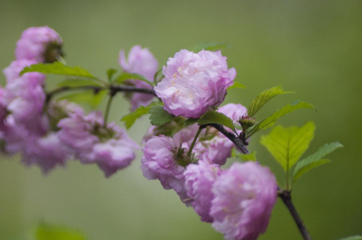 Flower_81 - Trage